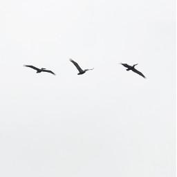 pcminimalism minimalism birds minimalistic minimal freetoedit