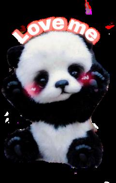 freetoedit desafiopicsart teddybear bear pandabear scteddybears