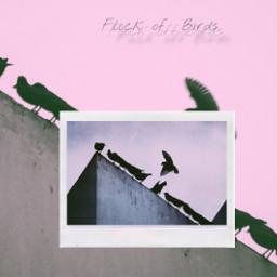 flockofbirds birds polaroid photography freetoedit