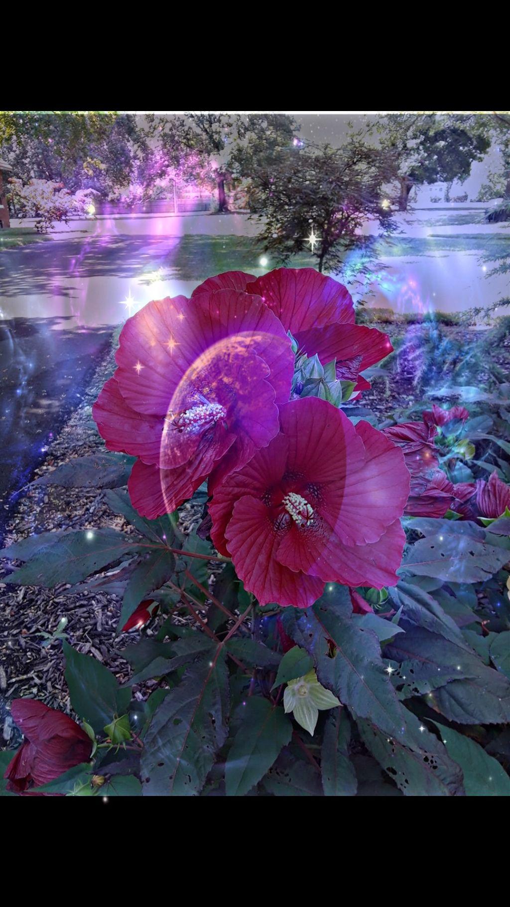 #freetoedit #doubleexposure #remixed #flowers #galaxy #moon #stars #beautiful