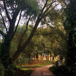photography nature autumn trees september freetoedit