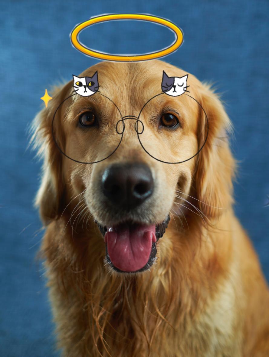 #freetoedit #dog #happytaeminday #foryou #l4l #f4f