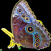 butterfly butterflies colorful symmetrical beauty freetoedit