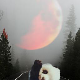 freetoedit panda lune ecgiantanimals giantanimals