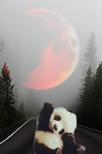 #freetoedit #panda #lune
