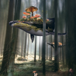 freetoedit fantasy forest trees whale