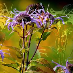 flowers wildflowers doubleexpesure pretty