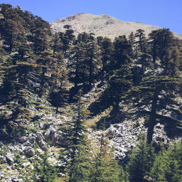 photography nature mountains forest trees
