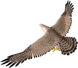 freetoedit animal bird eagle