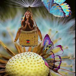 freetoedit dandelion butterfly ircmakeawish