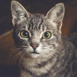 kitty cat cats animal pet freetoedit