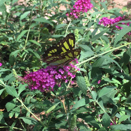 unedited butterfly nature