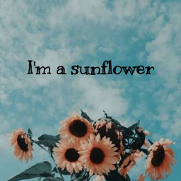 imasunflower