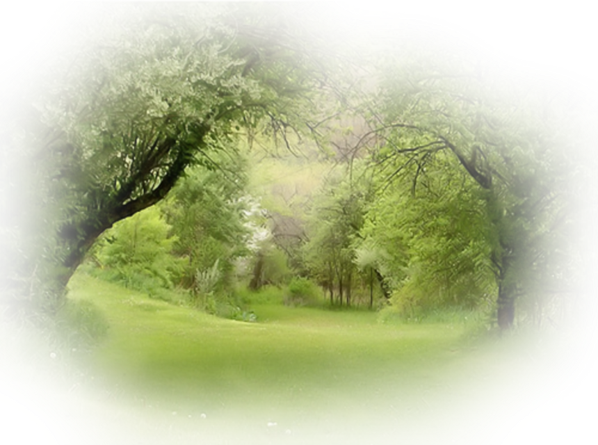 #деревья#лес#