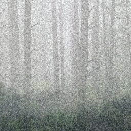 freetoedit forest foggy trees woods