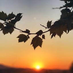 leaves sun pcleaves