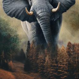 freetoedit fantasy art elephant forest