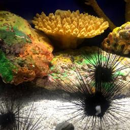 underwater freetoedit underthesea