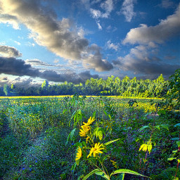 freetoedit remixit green nature landscape