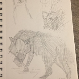 art drawing traditionaldrawing wolf foxes school