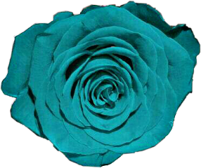 freetoedit teal turquoise flower rose