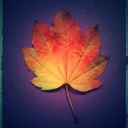 freetoedit leaf solitary autumn