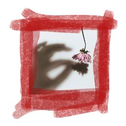 collage flower shadow