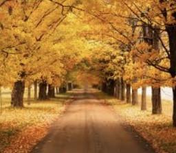 leaves leavesontheground