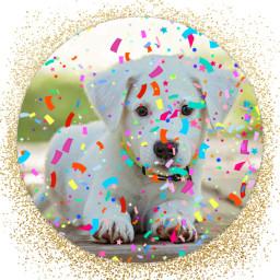 dogs confetti frames gold cute freetoedit