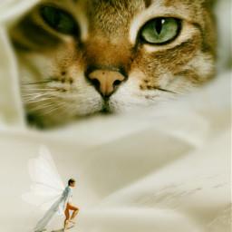 freetoedit cat giantanimals watchingyou fairy