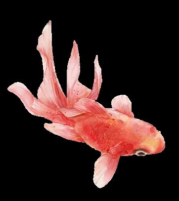 #fish #goldenfish #edit #edited #editing #freetoedit #freedom