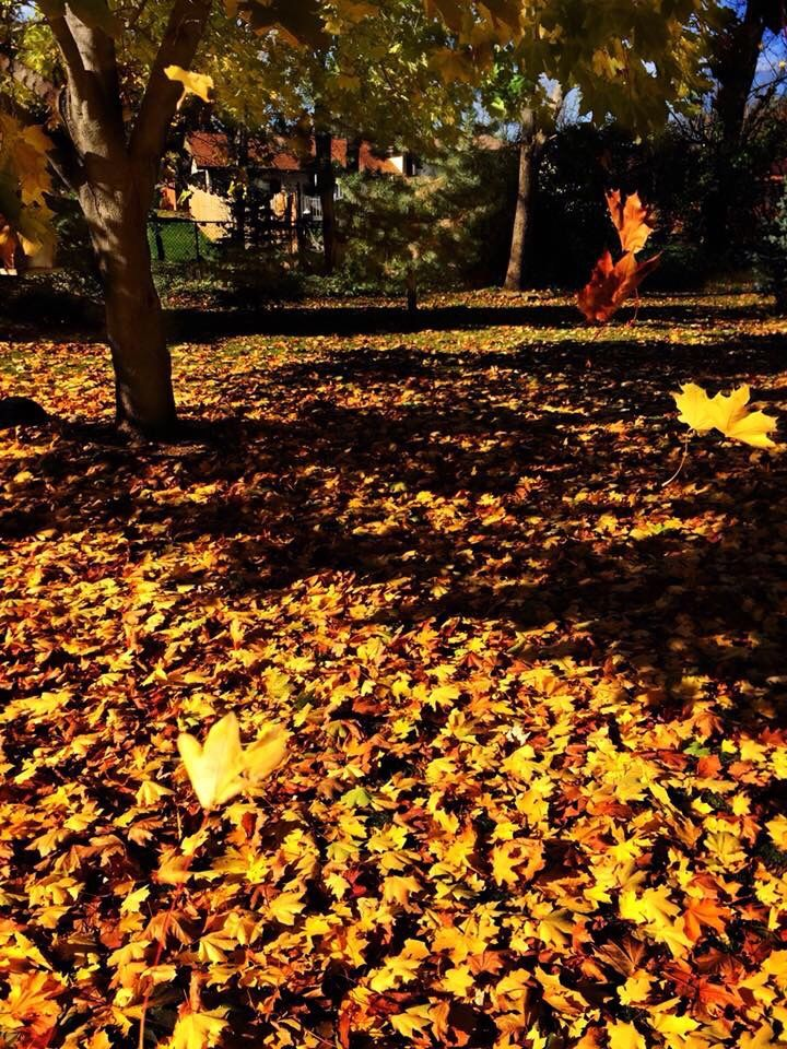 #autumnday #fallingleaves #windy #myoriginalphoto #picsart @picsart