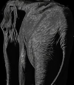 freetoedit scelephants elephants elephant biology