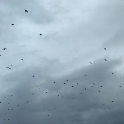 birds naturelover interesting cool photography freetoedit