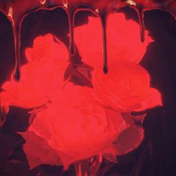 freetoedit bloodlust bloodrose redrose