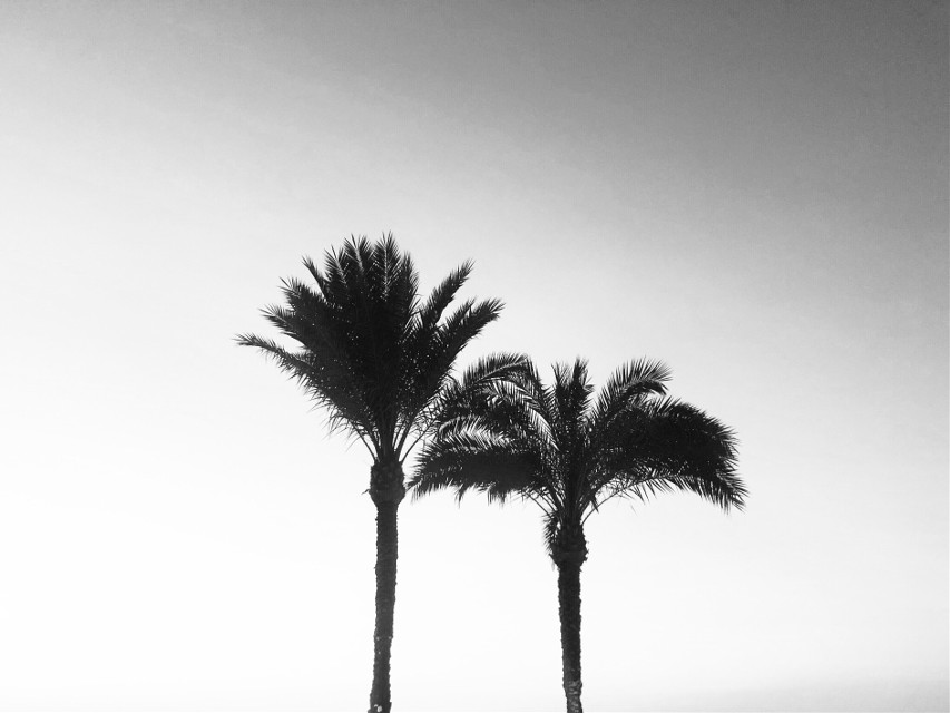 #freetoedit #nofilter #minimalism #photography #phonephotography #nature #naturephotography #sky #trees #palmtrees #sun #sunset #colors #silhouette #evening #popular #interesting #travel #egypt #sharmelsheikh #noedit #background