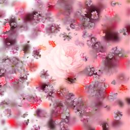 freetoedit floralbackground flowers petals background