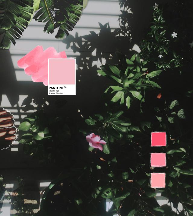 #pantone #colorpalette #plants #aesthetic