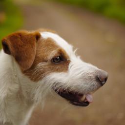 dog doggy pet animal animals freetoedit