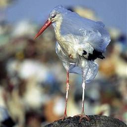 freetoedit plastic stork