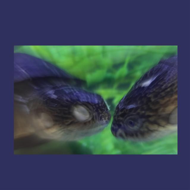#underthesea #underwater #iliketurtles #turtlelove