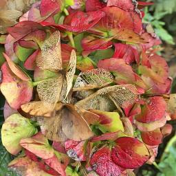 naturephotography flowers autumn september2019 artisticeffect