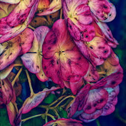 naturephotography flowers rainy autumn september2019
