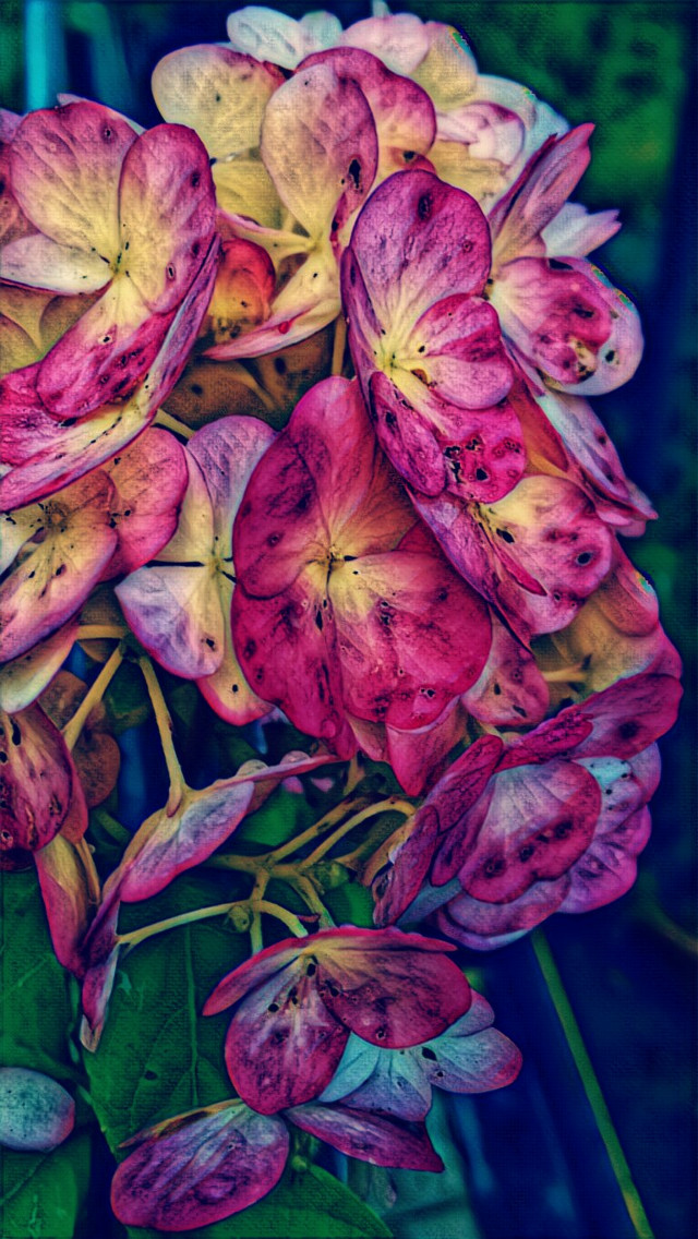 #naturephotography #flowers #rainy day #autumn #september2019 #artisticedit #artisticeffect
