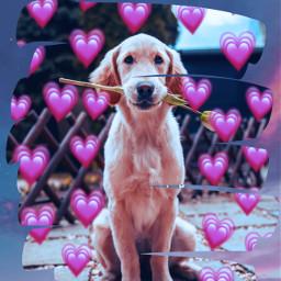freetoedit doggo emojibackground cutie