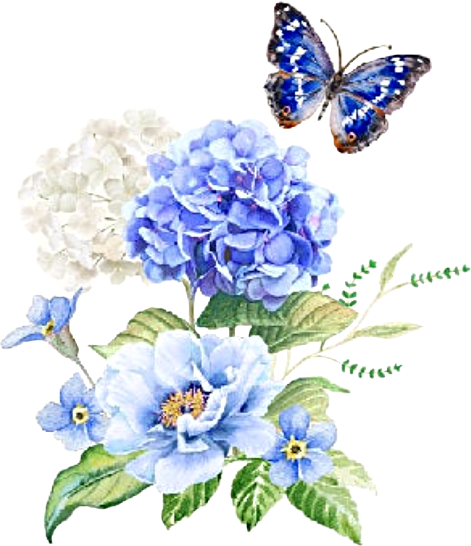#watercolor #flowers #floral #bouquet #hydrangea #butterfly #clipart #png