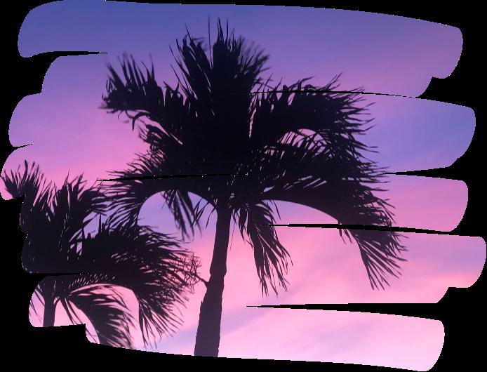#purplesky #pinksky #pink #purple #sky #palmtree #holiday #relaxing #cool #cute #tree #skribble #scribble  #freetoedit