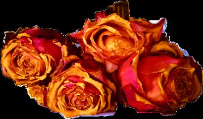scdriedflowers driedflowers freetoedit