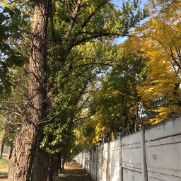 atumn fall nature trees interesting freetoedit