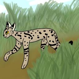 serval cat grass grassy drawn
